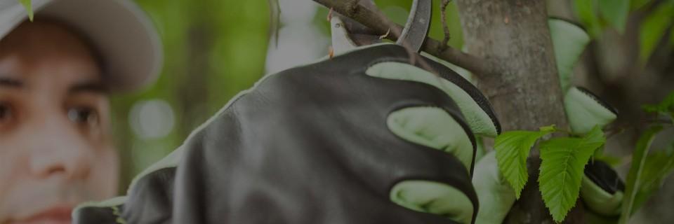 Подрязване на плодни дръвчета
