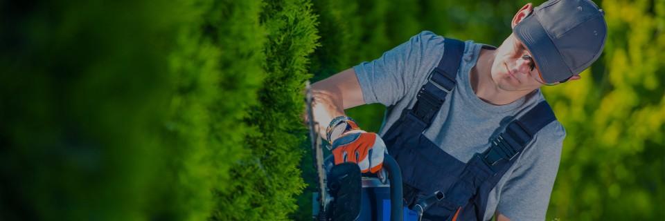 Проектиране и озеленяване на зелени площи